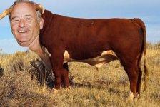Bull-Murray.jpeg