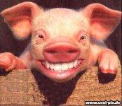 schweingehabt.jpg